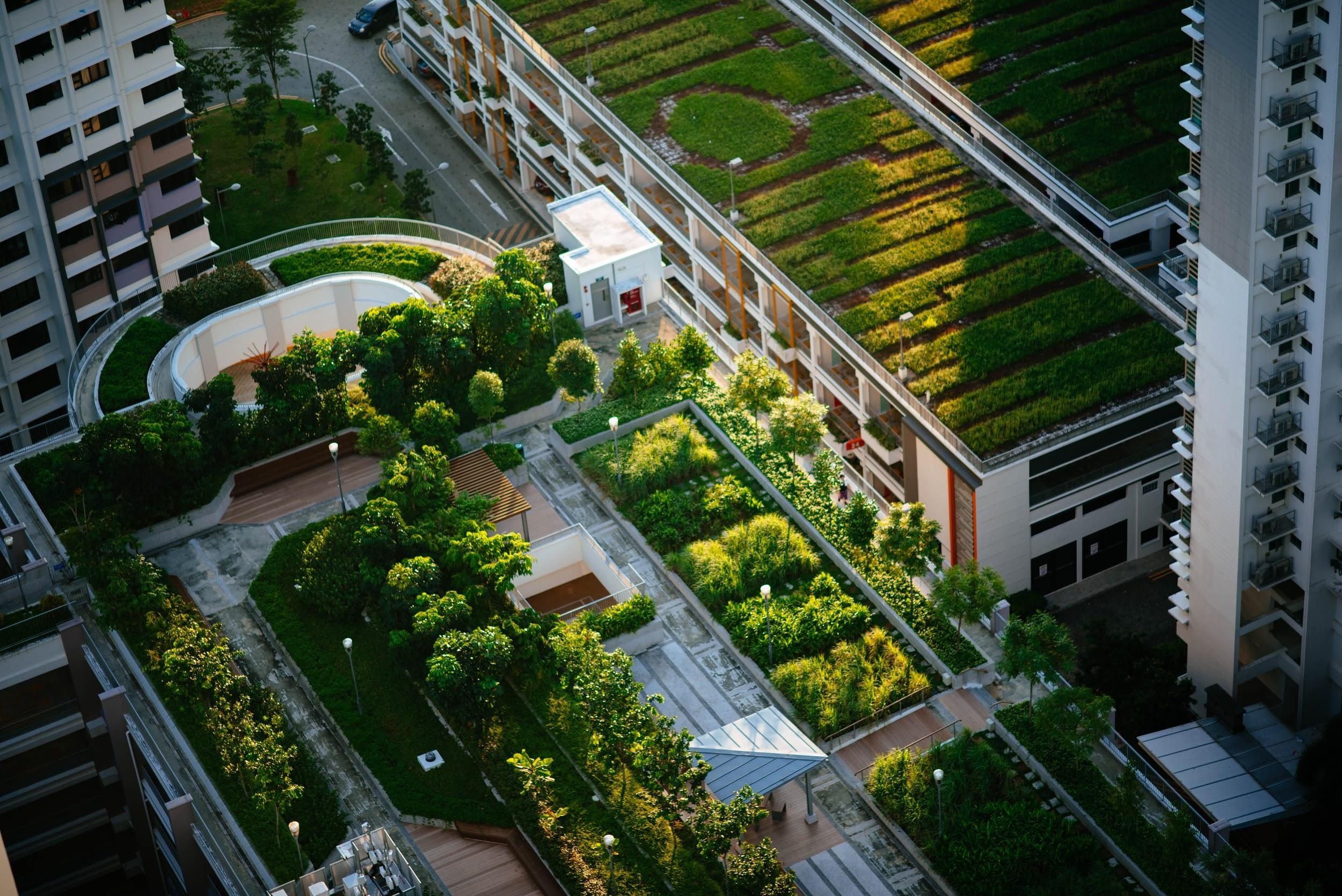 'Green roofs' such as these not only have environmental benefits, but a study shows they also strengthen your attention skills if you look at them during a micro-break.